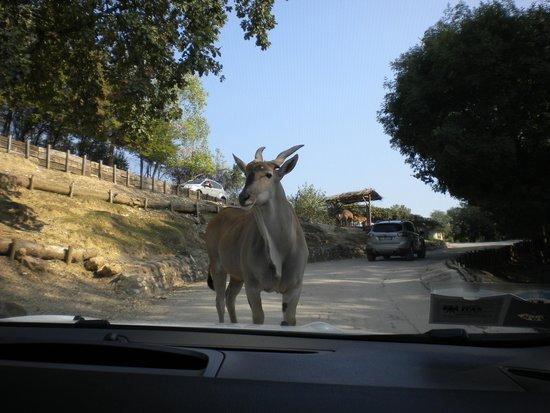 Parco Natura Viva: Attraversa la strada