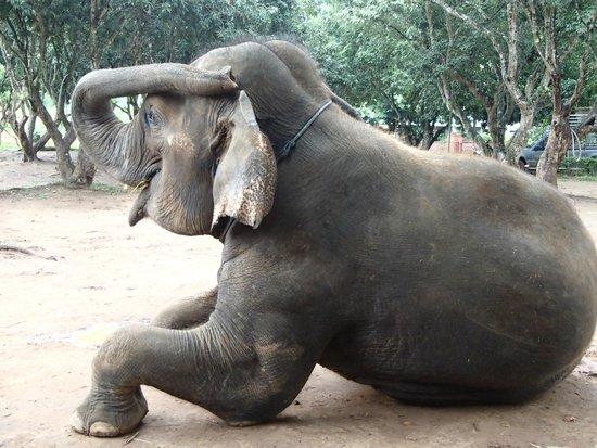 Baanchang Elephant Park - Private Day Tours: En attendant le casse-croûte...