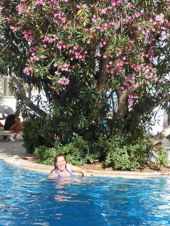 Mirage World Resort Hotel: pool and tree