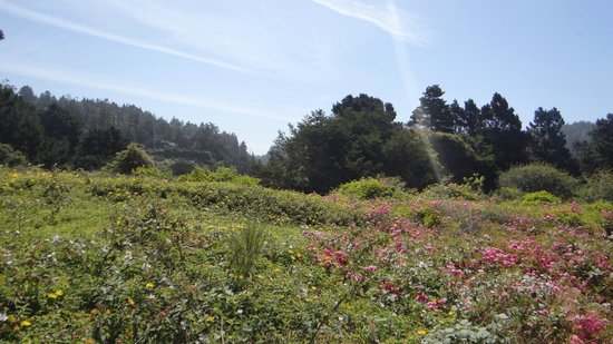 Mendocino Coast: Mendocino.. along the trail leading to the beach