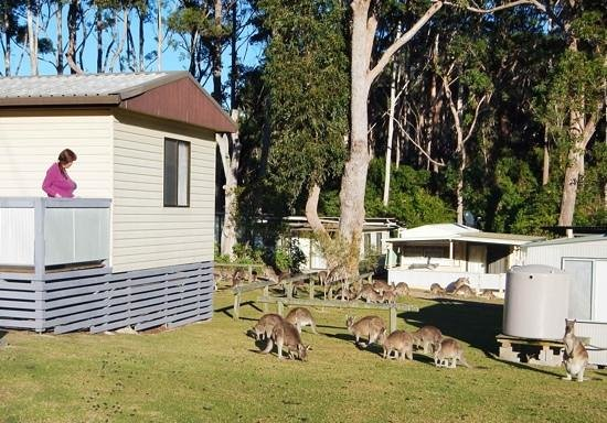 Durras Lake North Holiday Park : a room with a roo