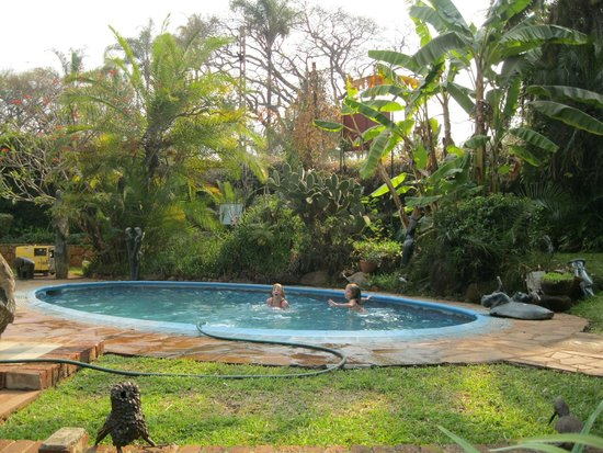 Small World Backpackers Lodge: Garden and Pool