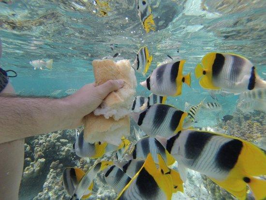 Le Taha'a Island Resort & Spa: Jardin de Corail TAHAA RESORT