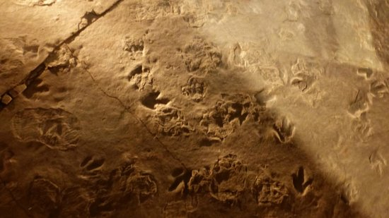 Dinosaur State Park & Museum: foot prints