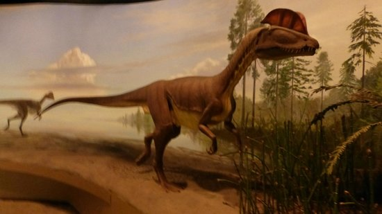 Dinosaur State Park & Museum: replica