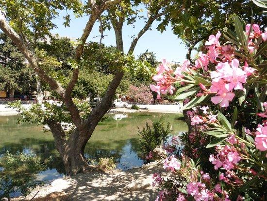 Taverna Gefyra Preveli: Oleander by the lake
