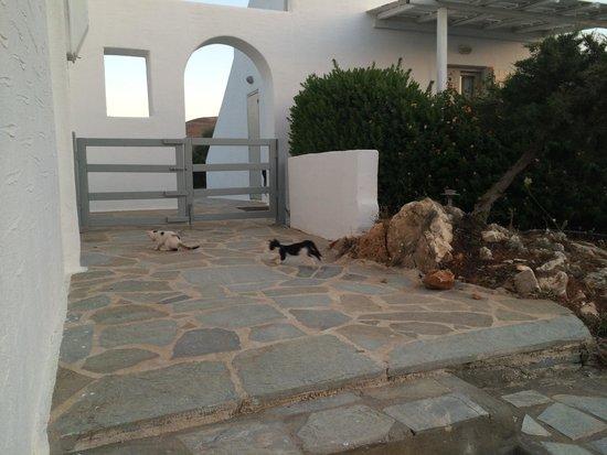 Anemoi Resort : котята на территории