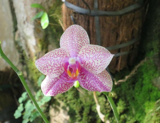 Lumbalumba Diving: An orchid by the pool