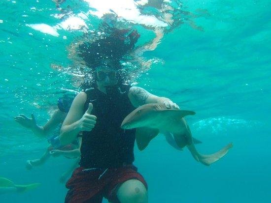 Xanadu Island Resort: Swimming with sharks