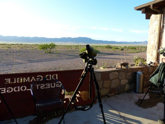 D.D. Gamble Guest Lodge and Ranch: Birding early morning from the terrace at DD Gamble