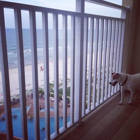 Hyatt Place Daytona Beach - Oceanfront: Bandit very impressed with the view