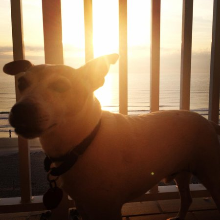 Hyatt Place Daytona Beach - Oceanfront : Bandit sad to leave this beautiful sunrise