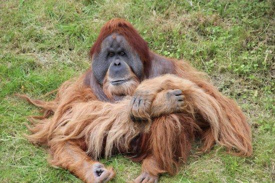 Leipzig Zoo (Zoologischer Garten Leipzig): Hier bin ich der Chef!