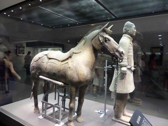 Mausolée de l'empereur Qin : Коник