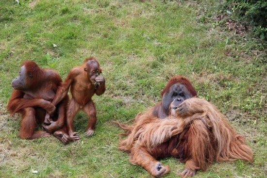 Leipzig Zoo (Zoologischer Garten Leipzig): Vater, Mutter, Kind !