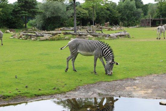 Zoologischer Garten Leipzig: Afrika - Idylle