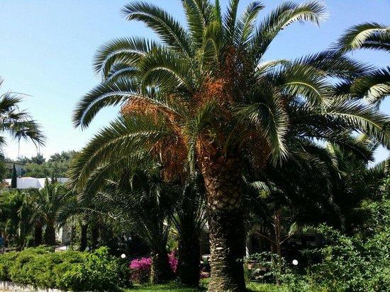Pine Bay Holiday Resort: Garten