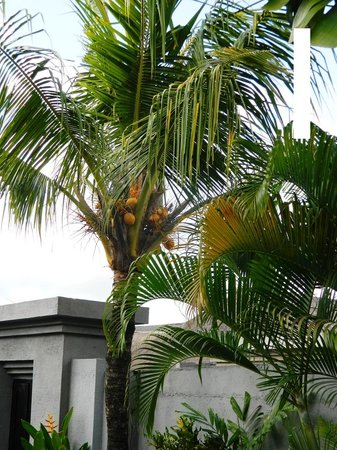 Bali Merita Villa & Spa : Garden Detail