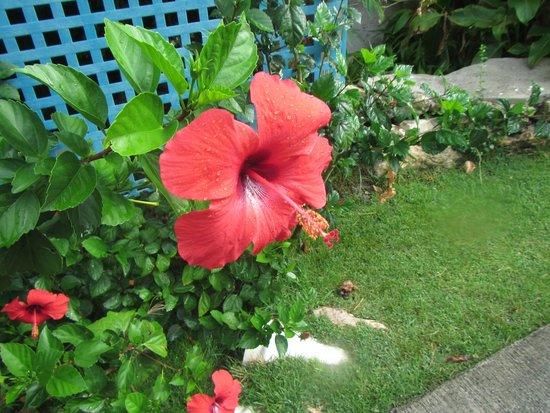 The Verandah Resort & Spa : Lovely flowers outside cabin
