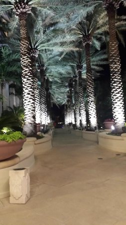 Loews Miami Beach Hotel: walk to pool and beach at night. . .