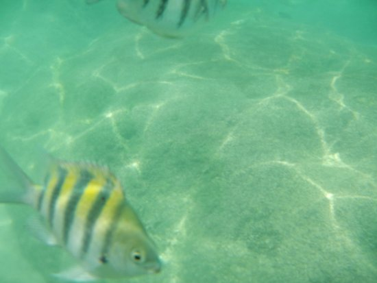 Xel-Ha: snorkeling