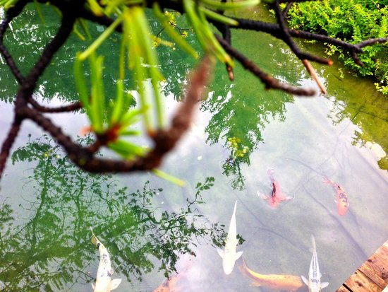 Hotel Omni Mont-Royal : Montreal Botanical Gardens