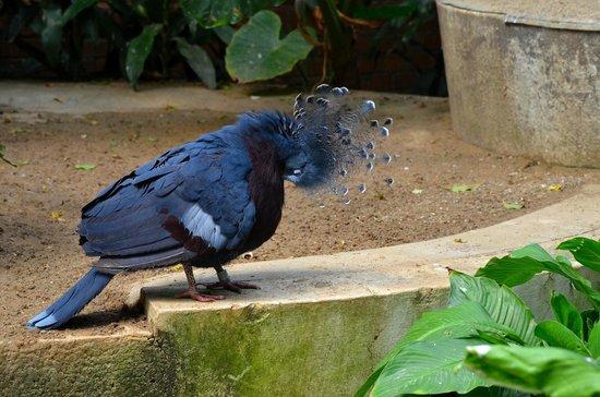 National Aviary: British Monarch Queen Victoria