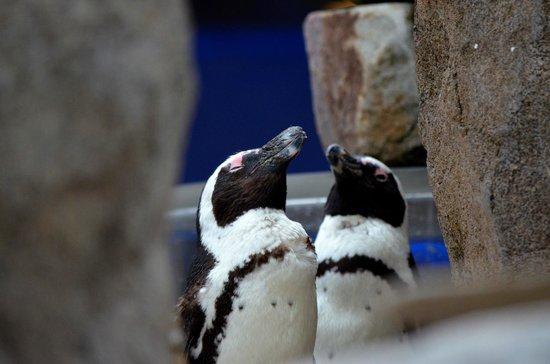 National Aviary: Penquins