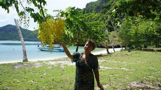 Mu Ko Ang Thong National Park : Красивый остров, здесь мы плавали на каноэ