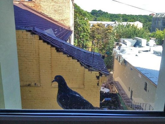ibis Kiev City Center: This pigeon showed up every morning at my windowsill.