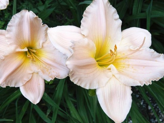 Langdon Hall Country House Hotel & Spa : Lilies @ Langdon Hall (summer)