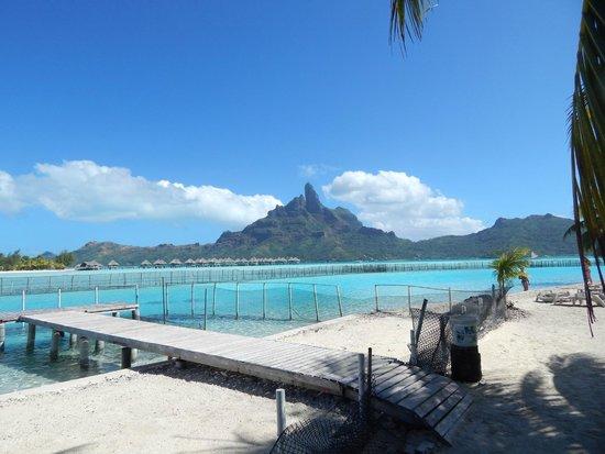Bora Bora Lagoonarium: Vistas desde el lagoonarium