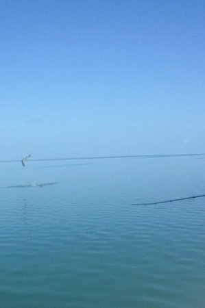 Key West Pro Guides: Tarpon in the air!