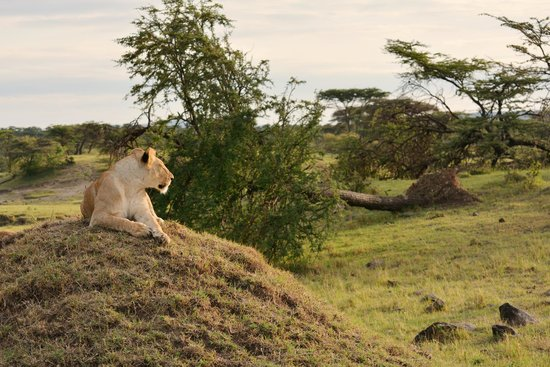 Mahali Mzuri - Sir Richard Branson's Kenyan Safari Camp: Enjoying the sunset