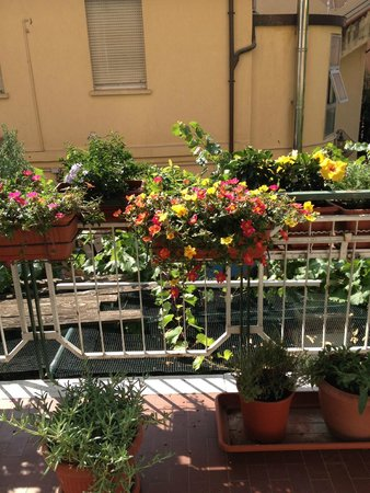 Terrazzo fiorito - Foto di Hotel Mirella, Rimini - TripAdvisor