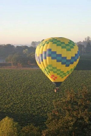 Up & Away Ballooning: Over the vineyards.