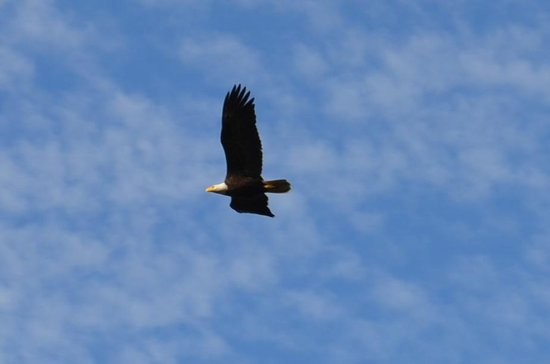 The Francis: Watching Soaring Eagles from the Deck