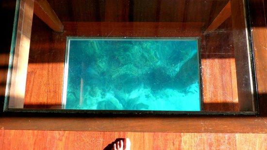 Maitai Polynesia Bora Bora: The glass floor - so yopu can see the fish