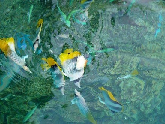 Maitai Polynesia Bora Bora: some of the fish