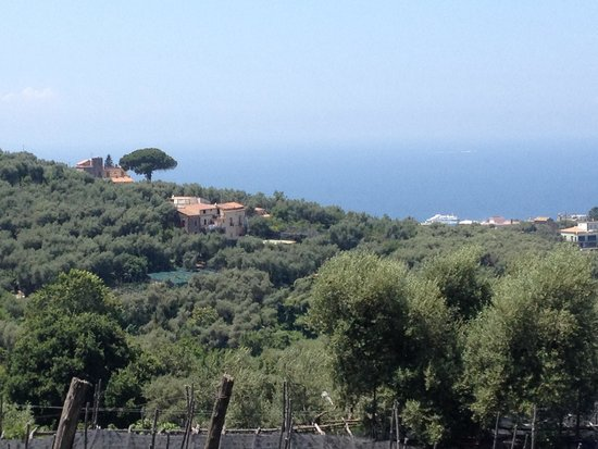 Grand Hotel Aminta: View from the villa, overlooking the orange groves