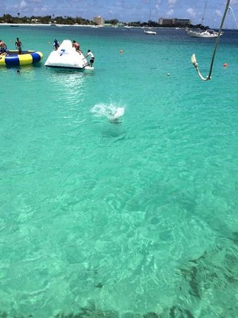 The Boatyard: rope jump, trampoline...nice!!!