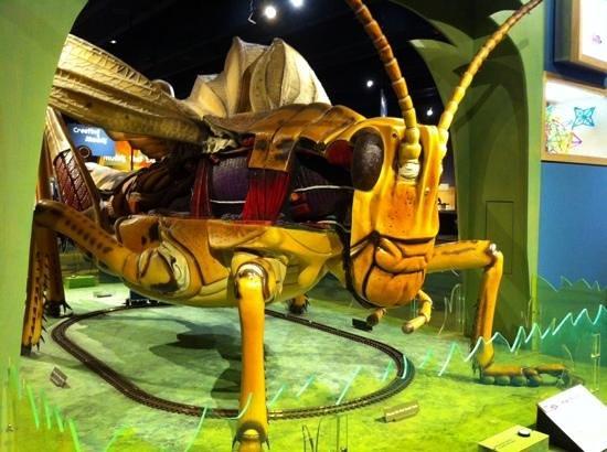 Museum of Science : small vs big exhibit