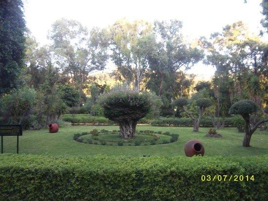 Dionysos Hotel : garden