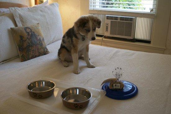 Brass Lantern Inn: Special doggie welcome!