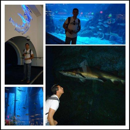 Dubai Aquarium & Underwater Zoo: Vistas del aquario
