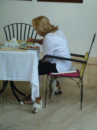 Ninova Boutique Hotel : Breakfast with cats