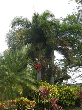 Romney Manor: Tree Tops
