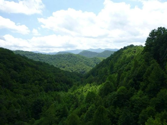 Navitat Canopy Adventures - Asheville Zipline: You can slightly see the zip line if you look close.
