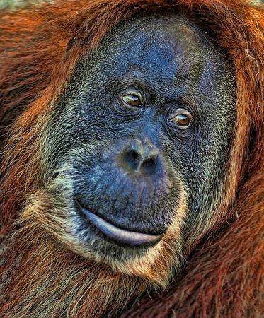 Dallas Zoo: face