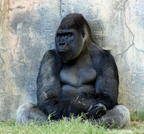Dallas Zoo: the thinker
